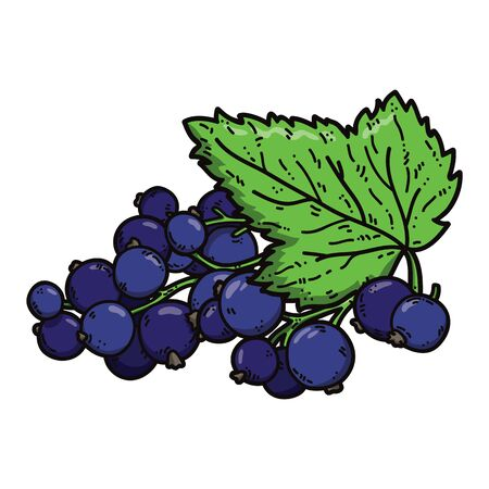 cute black currant. Vector cute hand drawn colorful black currant and leaf
