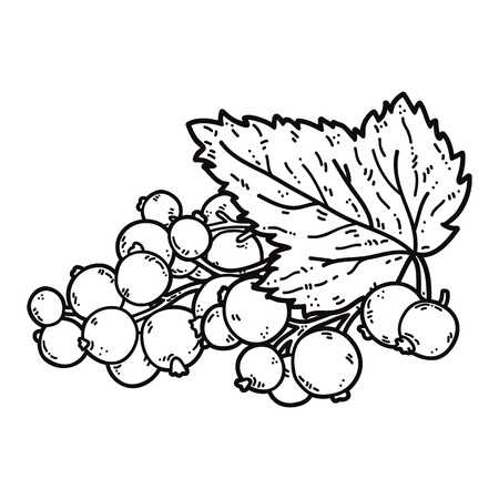 currant: cute black currant. Vector cute hand drawn black currant and leaf outlines Illustration