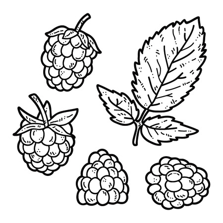cute Raspberry. Vector set of hand drawn cute raspberry outlines Illustration
