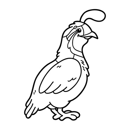 Cute quail. Vector illustration of cute cartoon quail character for children, coloring and scrap book