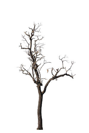 Dry tree dead isolated on white background Фото со стока