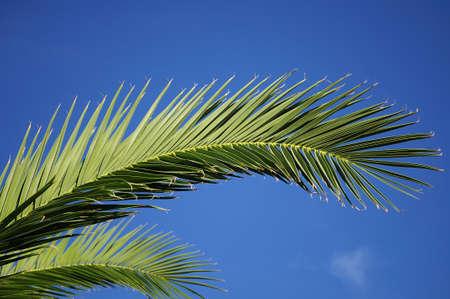 Palm Zdjęcie Seryjne - 4701455