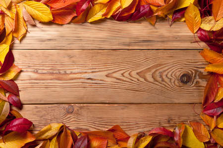 Autumn leaves from fruit trees on wooden background with copy space  Top view  photo