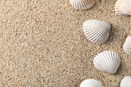 Seashells on the sand with copy space Stock Photo - 16604515