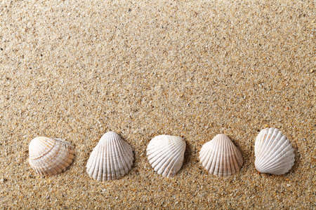 Sea shells on sand  Holiday beach background with empty room for text photo