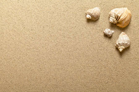 sandy beach: Sea shells on sandy beach. Summer background. Top view Stock Photo