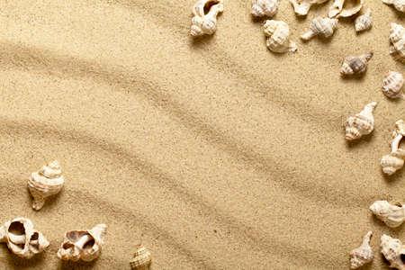 Sea shells on sandy beach. Summer sand background. Top view Standard-Bild