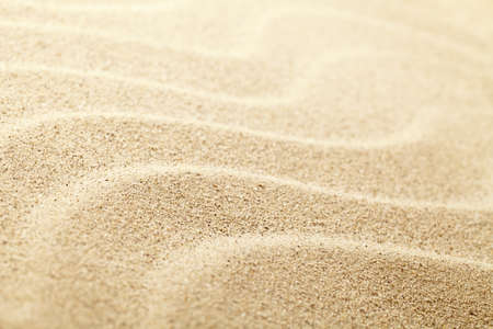 sand grains: Sandy beach background for summer