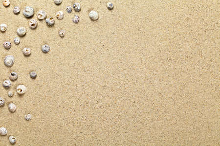 Sea shells on sandy beach background with copy space. Top view