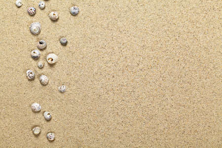 Sea shells on sand background. Summer beach concept with copy space. Top view Stock Photo