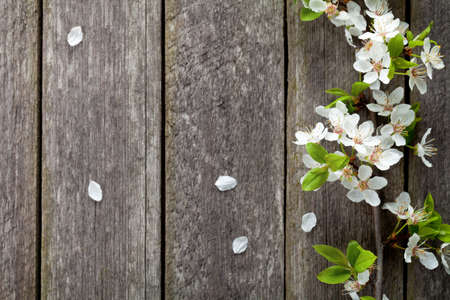 Spring flowers on wooden table background. Plum blossom. Top view