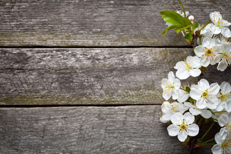Spring flowers on wood background. Cherry blossom. Top view photo
