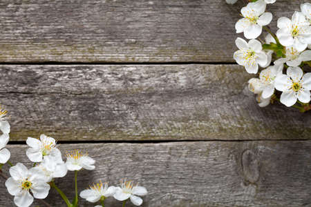 Spring background. Cherry flowers on wooden table. Top view photo
