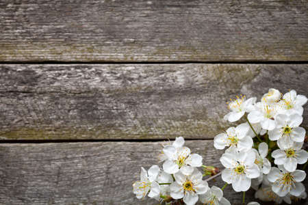 Spring background with cherry flowers on wooden table. Top view