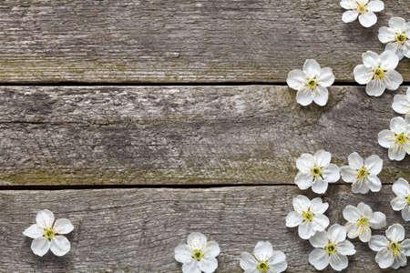 Spring background. Cherry flowers on wood. Top view Standard-Bild
