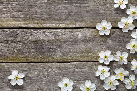 Spring background. Cherry flowers on wood. Top view photo