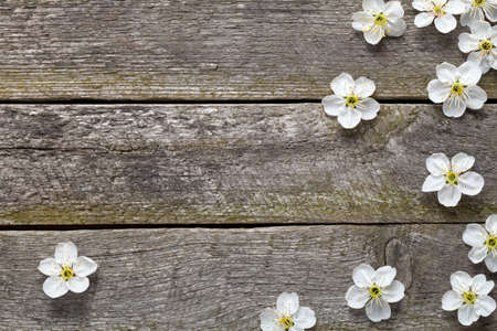table top: Spring flowers on wooden table. Cherry blossom. Top view