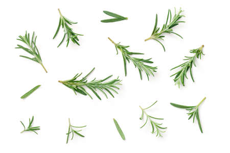Rosemary isolated on white background. Flat lay. Top view Stok Fotoğraf