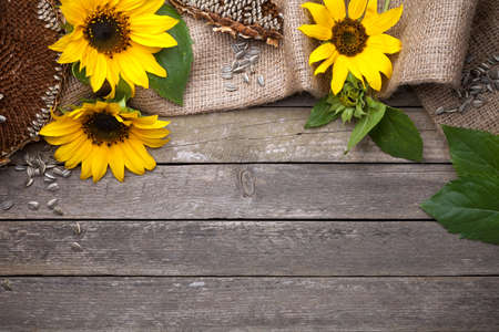 Autumn background with sunflowers on wooden table. Copy space. Top view Stock Photo