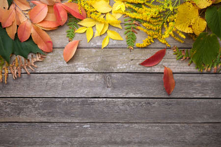 Autumn leaves on wood background. Copy space. Top view