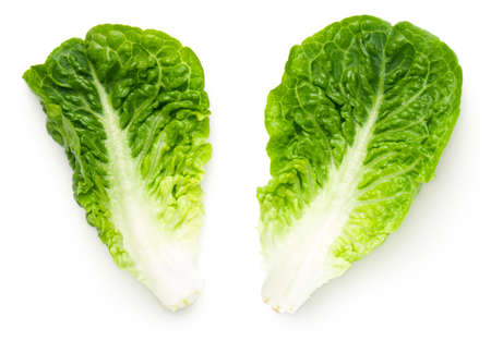 Romaine lettuce leaves isolated on white background. Baby cos. Top view