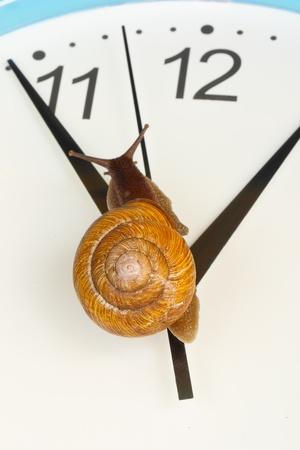 grape snail: Grape snail climbing on a clock, close up