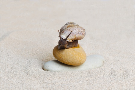 Grape snail sitting on the stones in sand