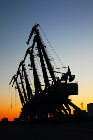 industrial view of port cranes on sunset background photo