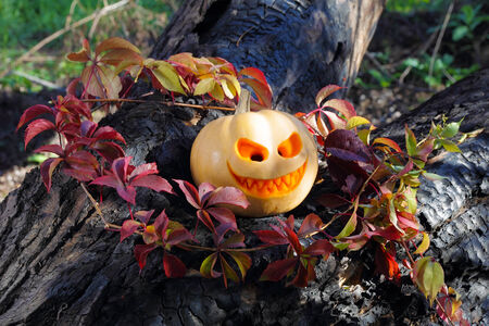 Halloween pumpkin in autumn leaves on the burnt tree photo