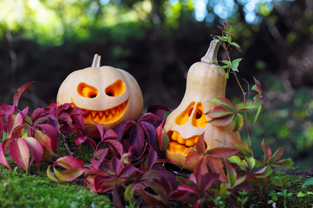 Halloween pumpkins in autumn leaves, close up photo