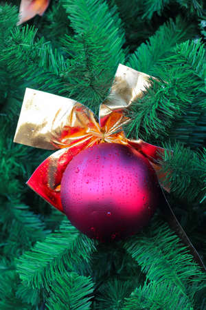 Closeup of christmas ball on the evergreen branches  photo