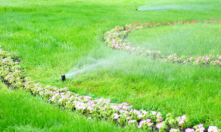 sprinkler water on the green grass lawn Stock Photo