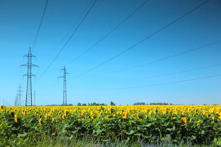 electrical networks: De alta tensi�n de la l�nea el�ctrica m�stiles en el campo de girasoles