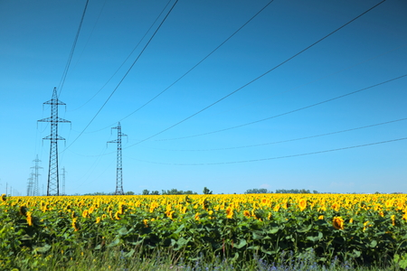 electrical tower: High-voltage power line masts in the field of sunflowers Stock Photo
