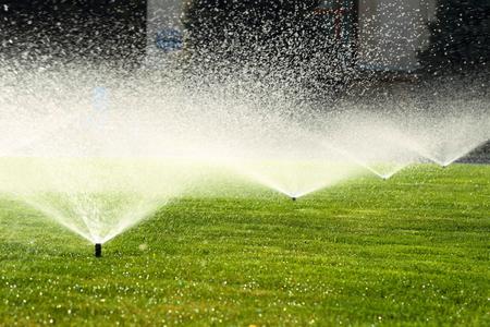 녹색 잔디에 물을 동안 화창한 여름 날에 정원 스프링클러