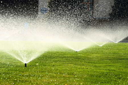 sprinklers: garden sprinkler on a sunny summer day during watering the green lawn