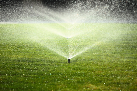 sprinkler: garden sprinkler on a sunny summer day during watering the green lawn