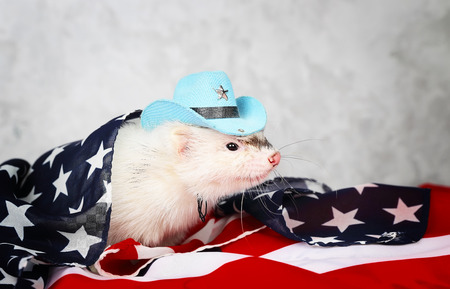 hunter playful: Little cute ferret in a cowboy hat on the USA flag background