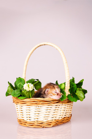 interested baby: tiny kitten sleeping in basket with flowers