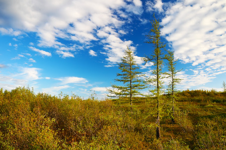 tundra: Beautiful landscape with tundra in Taimyr, Russia Stock Photo