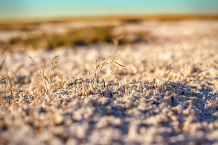 salinity: Steppe saline soils of Kazakhstan