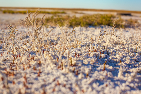 Steppe saline soils of Kazakhstan