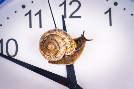 탁상용 시계에 포도 달팽이 스톡 콘텐츠