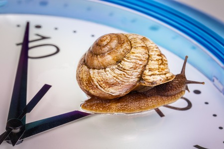 a grape snail on an desktop clock Stock Photo