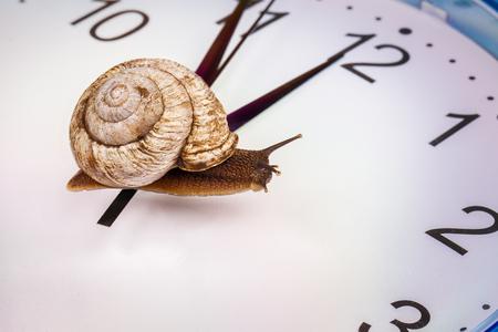 paciencia: a grape snail on an desktop clock Foto de archivo