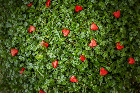 little red hearts on the green grass Stock Photo