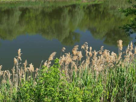 Cane vicino al fiume e la riflessione di alberi in acqua