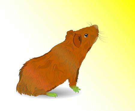Vector Guinea Pig  Vector illustration  EPS10  Transparency and art brushes used