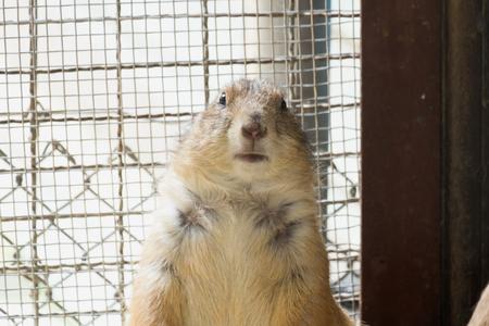fox fur: Cute fluffy squirrel stare at cameraCute fluffy squirrel
