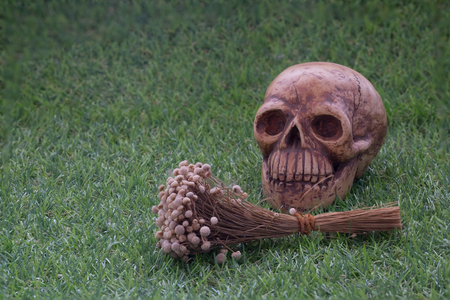 pass away: Still life of human skull and dry flower on green grass sign of death